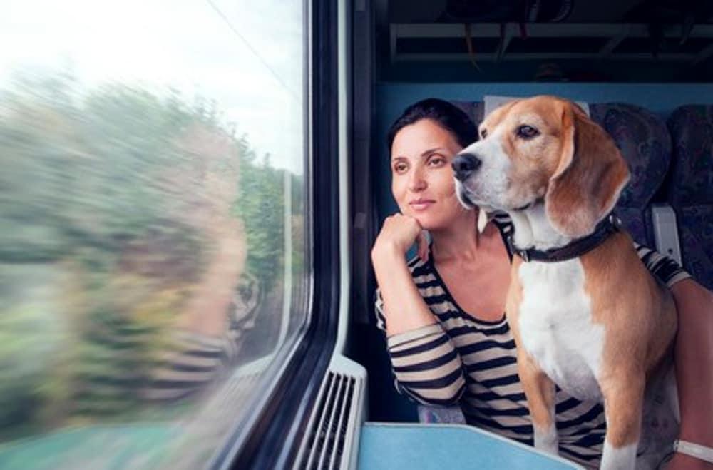 tutte-le-regole-per-viaggiare-in-treno,-in-nave-e-in-aereo-con-il-quattro-zampe